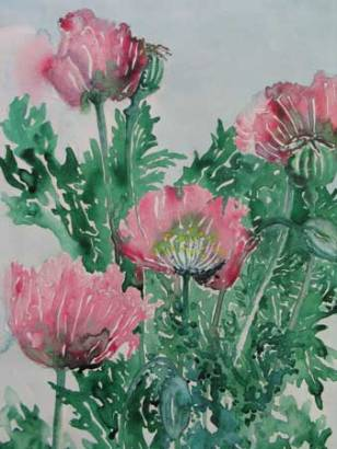 Felicity Potter poppies, watercolour, felicity pottery