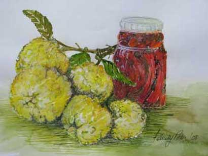 Felicity Potter still life with lemons, watercolour, felicity potter