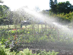House and Garden Irrigation-in-the-early-mor