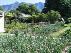 House and Garden The vegetable garden looking towards 12 oclock peak