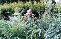 House and Garden felicity-in-the-artichokes