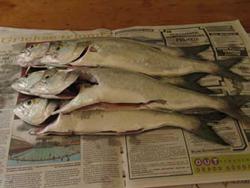 Fresh self-caught fish