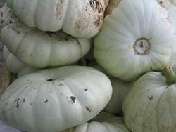 House and Garden home-grown-pumpkins