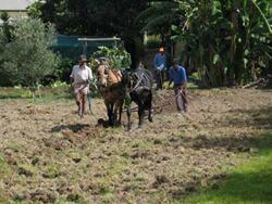 House and Garden Arichoke jacob-&-his-men-plowing-wit